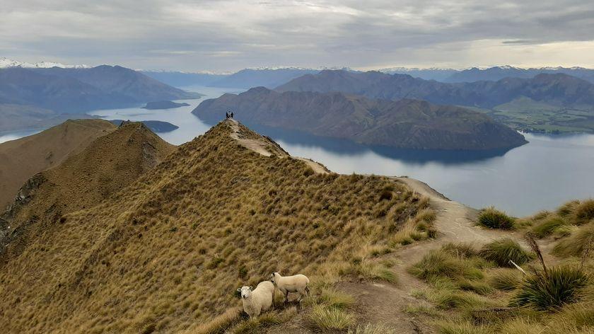 紐西蘭南島一定要去的登山行程-瓦納卡羅伊峰 Roys peak