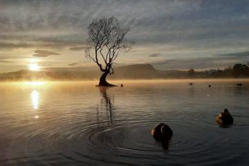 紐西蘭南島最美湖邊小鎮-瓦納卡Wanaka旅遊景點整理